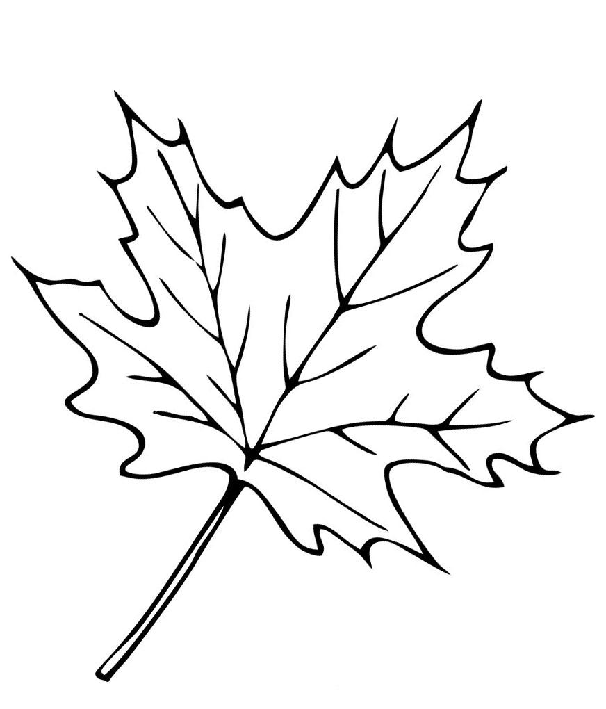 Раскраски листа клёна